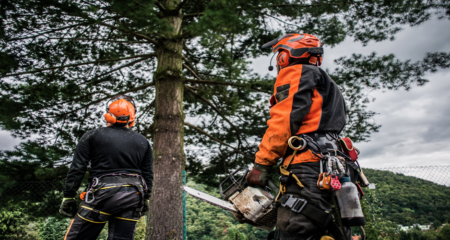 Specialist Tree Surgery Services
